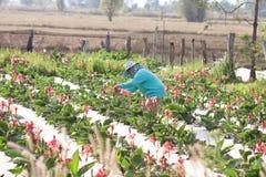 Azienda agricola del fiore Immagine Stock