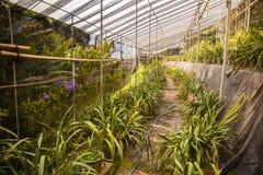 Azienda agricola del fiore dell'orchidea Fotografie Stock