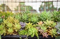 Azienda agricola del fiore della pianta Fotografia Stock