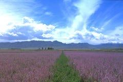 Azienda agricola del fiore nella città di Springfield, Xinjiang Immagini Stock Libere da Diritti