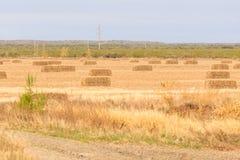 Azienda agricola del foraggio Fotografia Stock