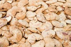 Azienda agricola del fungo Fotografia Stock Libera da Diritti