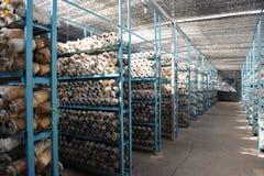 Azienda agricola del fungo Immagine Stock