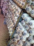 Azienda agricola del fungo Fotografia Stock