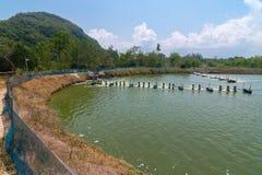 Azienda agricola del gamberetto, Tailandia Fotografia Stock