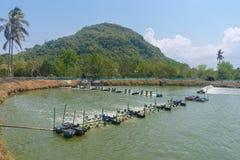 Azienda agricola del gamberetto, Tailandia Immagini Stock