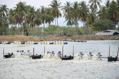 Azienda agricola del gamberetto, Tailandia Fotografie Stock Libere da Diritti