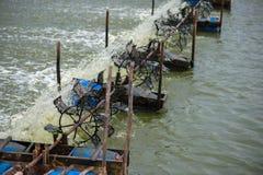 Azienda agricola del gamberetto, Tailandia Immagini Stock Libere da Diritti