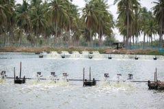 Azienda agricola del gamberetto, Tailandia Fotografia Stock Libera da Diritti