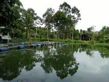 Azienda agricola del gamberetto in Tailandia Fotografie Stock