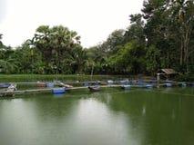 Azienda agricola del gamberetto in Tailandia Immagini Stock Libere da Diritti