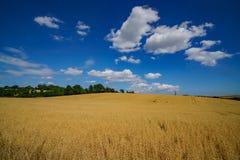 Azienda agricola del grano nell'azienda agricola antica educativa di Butser immagine stock libera da diritti