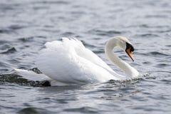 Azienda agricola del lago bird fotografie stock libere da diritti