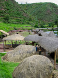 Azienda agricola del lama di Awana Kancha nel Perù Fotografia Stock Libera da Diritti