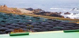 Azienda agricola del mare per produzione dei frutti di mare Immagini Stock