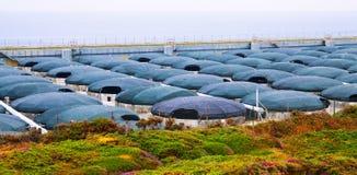 Azienda agricola del mare per produzione dei frutti di mare Fotografia Stock Libera da Diritti