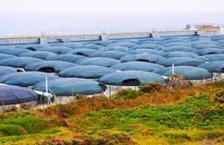 Azienda agricola del mare per produzione dei frutti di mare alla costa Galizia, Spagna dell'oceano Fotografia Stock