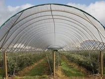 Azienda agricola del mirtillo Immagine Stock Libera da Diritti