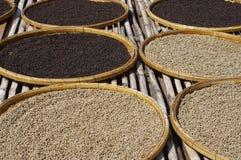 Azienda agricola del pepe Fotografia Stock