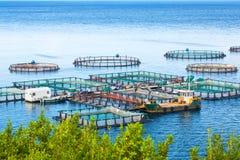 Azienda agricola del pesce di mare Gabbie per il dorado e la spigola di piscicoltura Il wo Immagini Stock Libere da Diritti