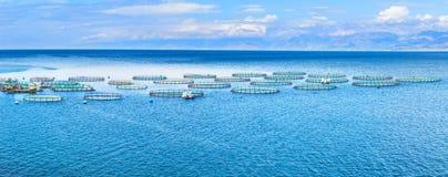 Azienda agricola del pesce di mare Gabbie per il dorado e la spigola di piscicoltura Il wo Immagini Stock