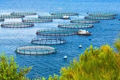 Azienda agricola del pesce di mare Gabbie per il dorado e la spigola di piscicoltura Il wo Immagine Stock
