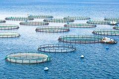 Azienda agricola del pesce di mare Gabbie per il dorado e la spigola di piscicoltura Il wo Fotografie Stock