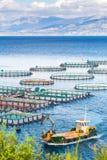 Azienda agricola del pesce di mare Gabbie per il dorado e la spigola di piscicoltura Il wo Immagine Stock Libera da Diritti