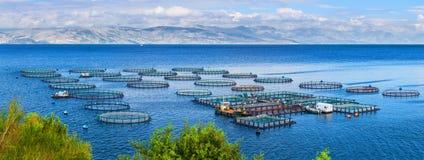 Azienda agricola del pesce di mare Gabbie per il dorado e la spigola di piscicoltura Il wo Fotografia Stock