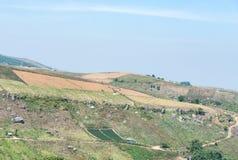 Azienda agricola del raccolto sull'alta montagna Immagini Stock