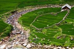Azienda agricola del riso fotografia stock libera da diritti
