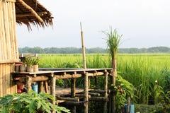 Azienda agricola del riso con la capanna alla luce solare di sera, campagna dell'agricoltore della Tailandia Immagini Stock