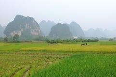 Azienda agricola del riso di montagna Immagini Stock