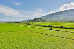 Azienda agricola del riso in paese Immagine Stock