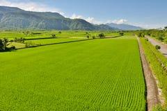 Azienda agricola del riso in paese Fotografia Stock Libera da Diritti