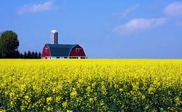 Azienda agricola del seme di senape Immagini Stock Libere da Diritti