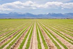 Azienda agricola del sud della California Fotografie Stock Libere da Diritti