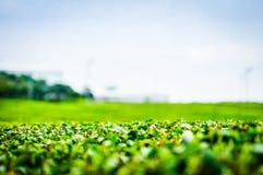 Azienda agricola del tè verde Immagine Stock Libera da Diritti