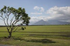 Azienda agricola del tappeto erboso Fotografia Stock