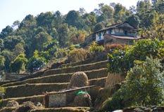 Azienda agricola del terrazzo Immagine Stock Libera da Diritti