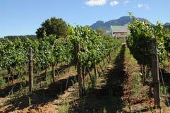 Azienda agricola del vino Fotografia Stock Libera da Diritti