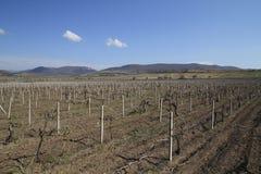 Azienda agricola del vino Immagine Stock Libera da Diritti