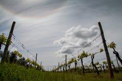 Azienda agricola del vino Fotografie Stock