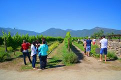 Azienda agricola del vino, Cile Immagini Stock Libere da Diritti