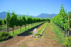 Azienda agricola del vino, Cile Fotografia Stock Libera da Diritti