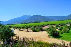 Azienda agricola del vino, Cile Fotografia Stock