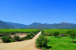 Azienda agricola del vino, Cile Immagine Stock Libera da Diritti