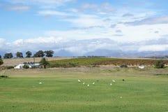Azienda agricola del vino in Sudafrica Immagini Stock Libere da Diritti