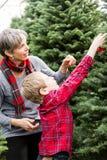 Azienda agricola dell'albero di Natale immagine stock
