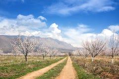 Azienda agricola dell'albicocca durante la stagione sping contro la catena montuosa di Vayk, provincia Armenia di Vayots Dzor Fotografie Stock